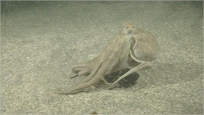 鉄腕ダッシュ】タコ マコちゃん メゾン城ヶ島